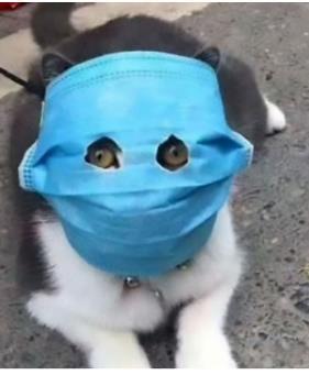OH NO!! Grumpy cat in Covid Mask